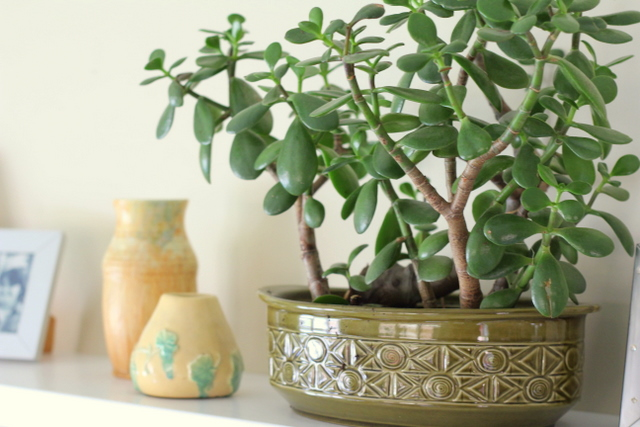 Plant And Office Décor: How Should You Go About It?