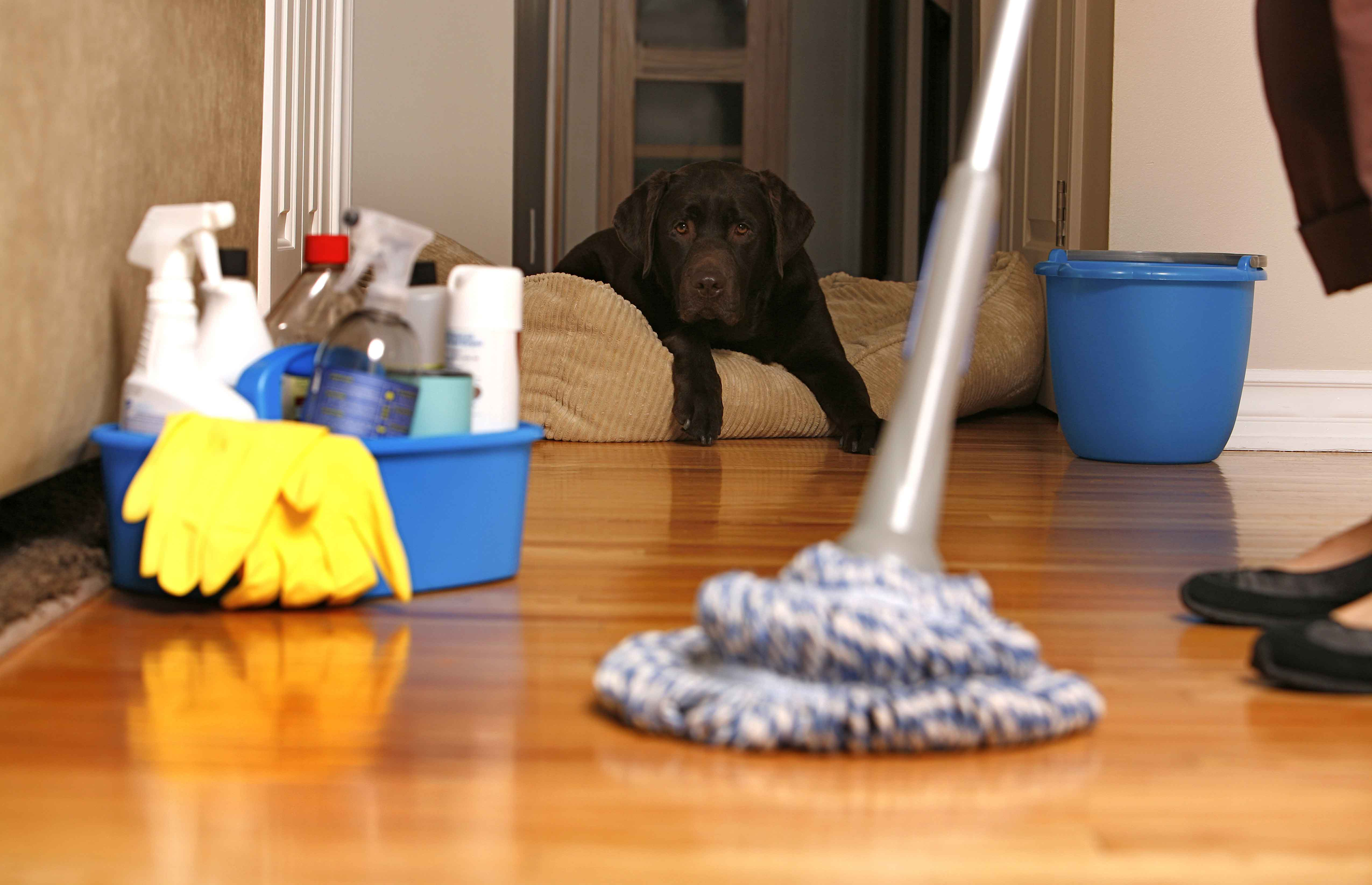 5 Steps for Spring Cleaning Success