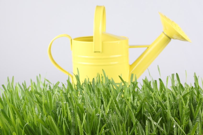 Simple Budget Tips to Maintain Your Lawn